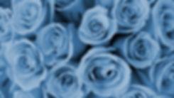 Sakura%20on%20Twitter_edited.jpg