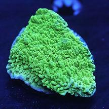 green monty cap.jpg