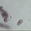 Thumbnail: Meet Cuteda, the STEMTaught Microscope Cart