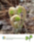 9_Plants.png