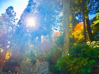 紅葉の秋✨