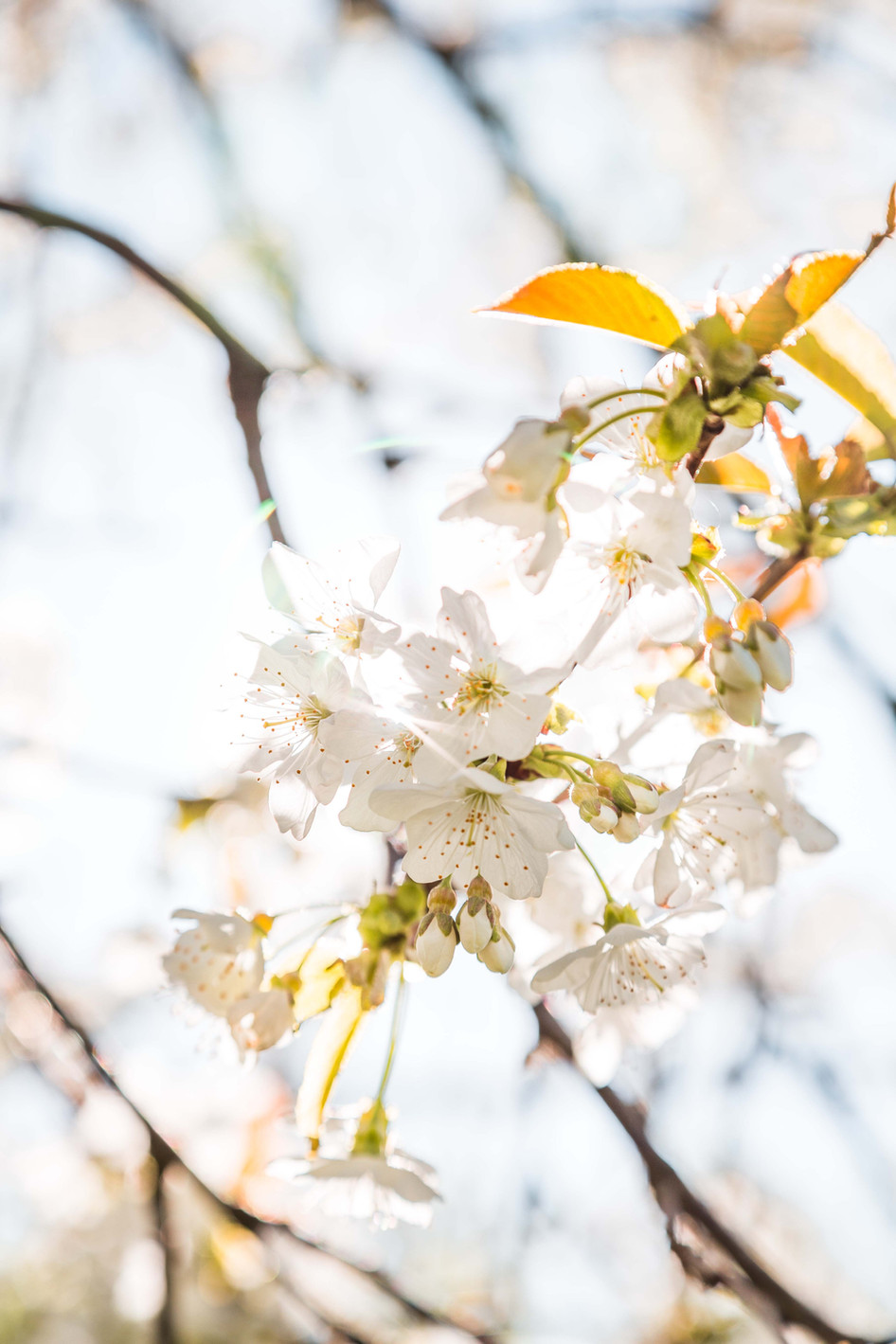 Fleur blanche, 2020