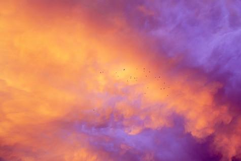 Oiseaux et ciel picard, 2020
