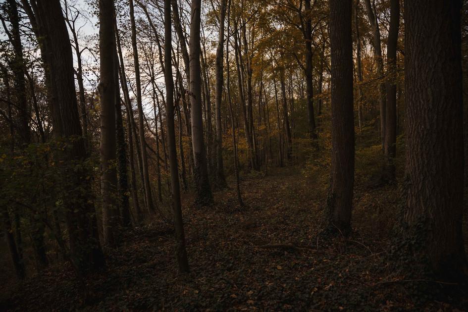 La forêt picarde en automne, 2020