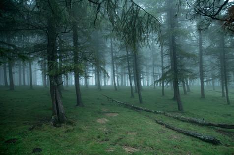 La foret d'Itxassou dans la brume, 2017