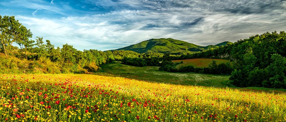 My Countryside #14