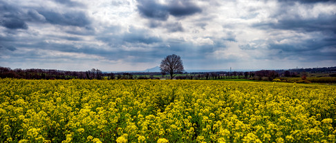 My Countryside #11