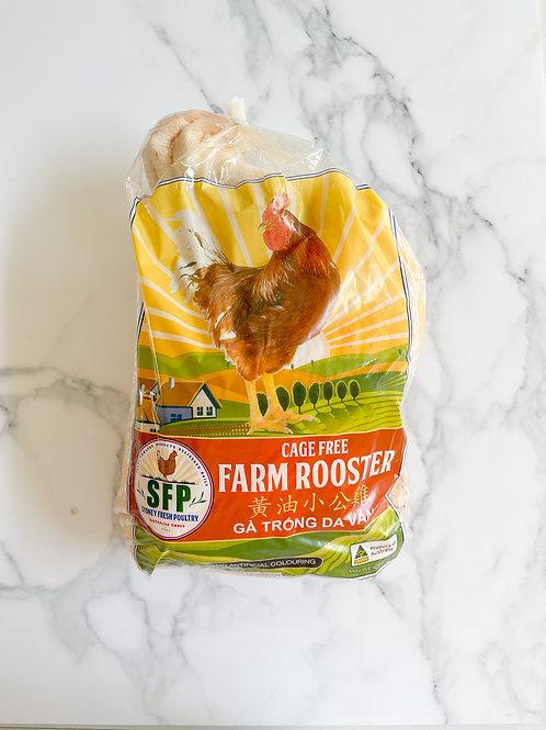 Cage Free Rooster | 黄油小公雞 | Gà Trống Chạy Bô