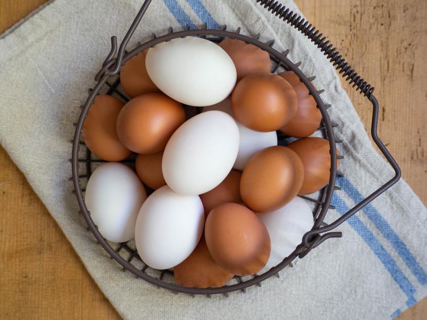 Sydney Fresh Poultry K.Vincent 2019 (114