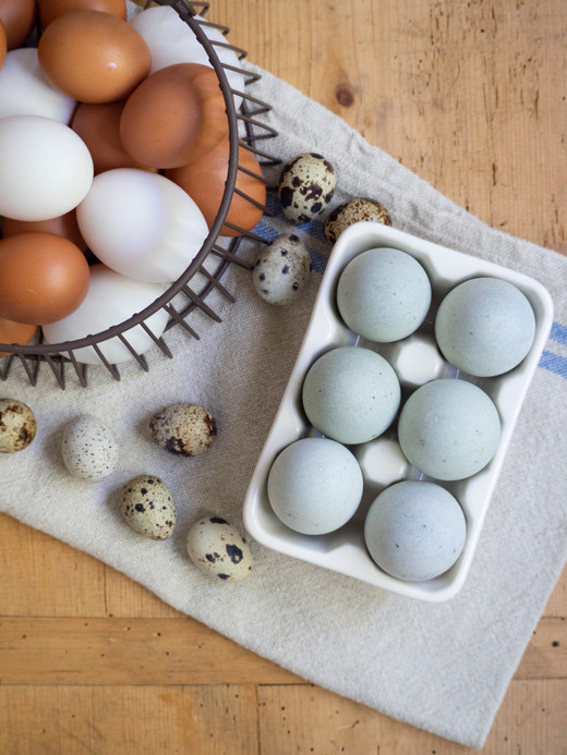 Sydney Fresh Poultry K.Vincent 2019 (123