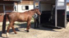 reeducation van cheval