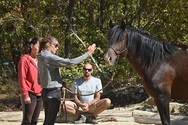 cours equitation ethologique var region paca