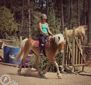 education du cheval