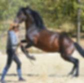 probleme cheval