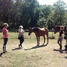 Stage équitation éthologique