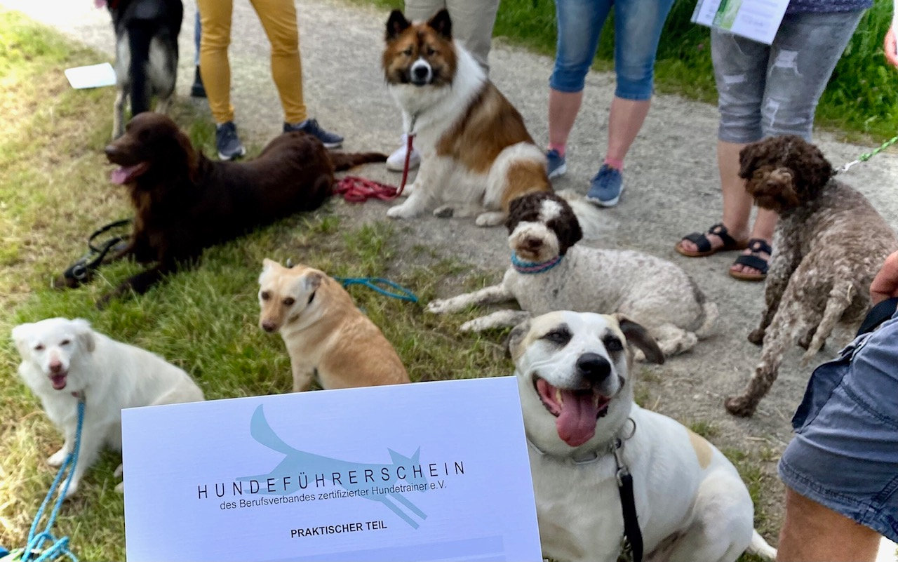 Hundeführerschein des BVZ