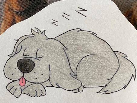 Warum schnarchen Hunde?