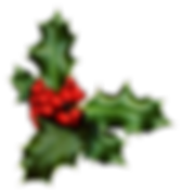 a-sprig-of-holly-isolated-on-a-white-bac