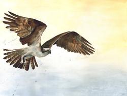 Osprey 'On the Rise' Rachel Farr.jpg