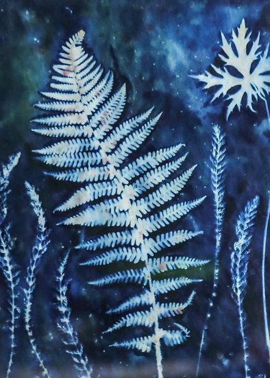 Nature's Patterns / Patrymau Natur