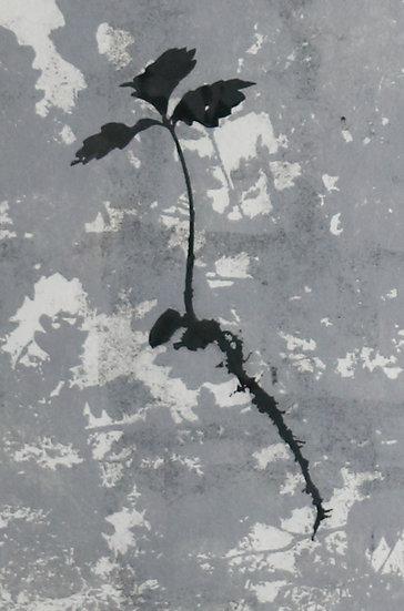 Growing Hope IV / Magu Gobaith IV