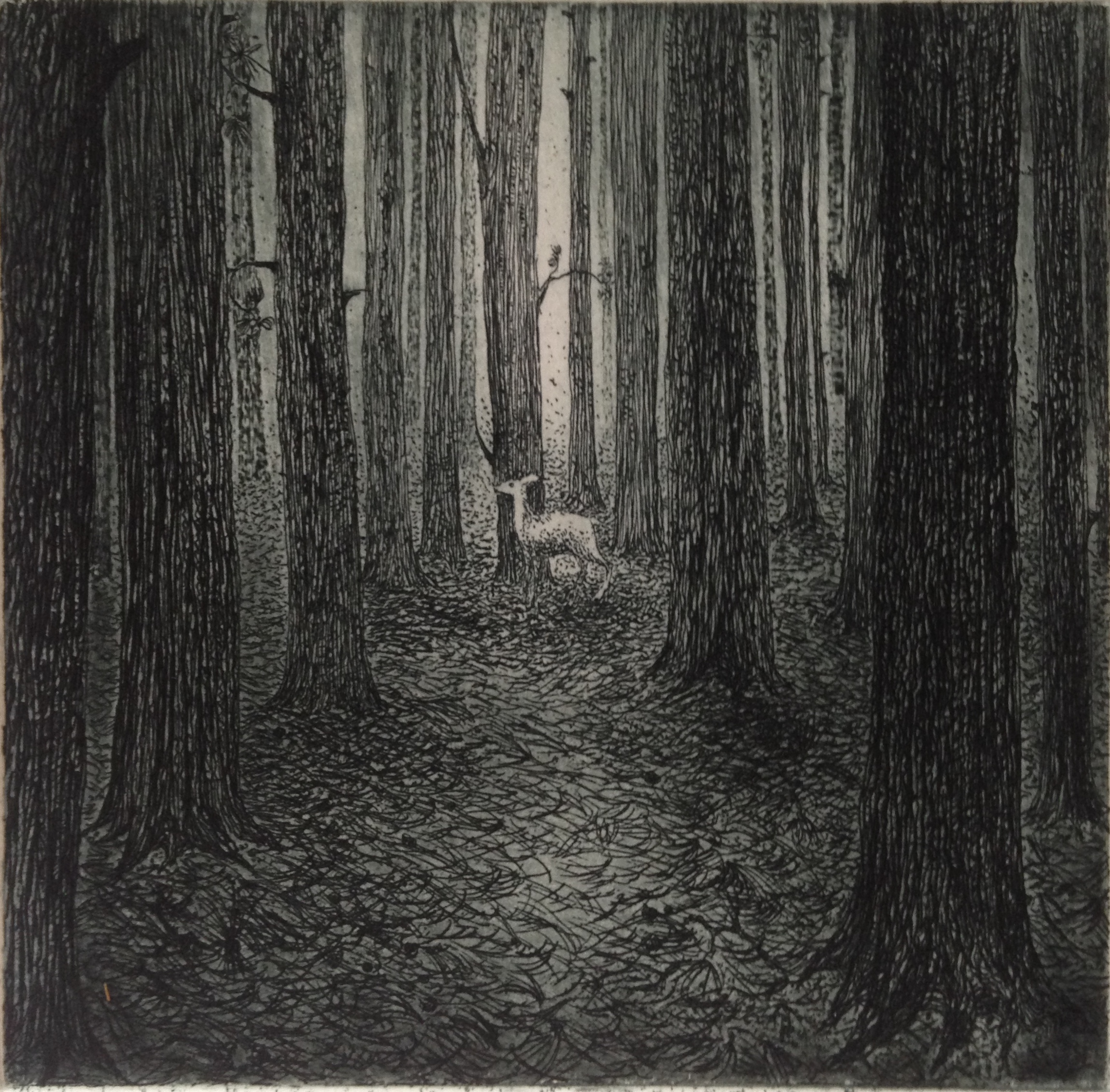 A forest - Etching - Flora McLachlan - SOLD