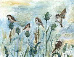 Rachel Farr - Sparrows Garden Party