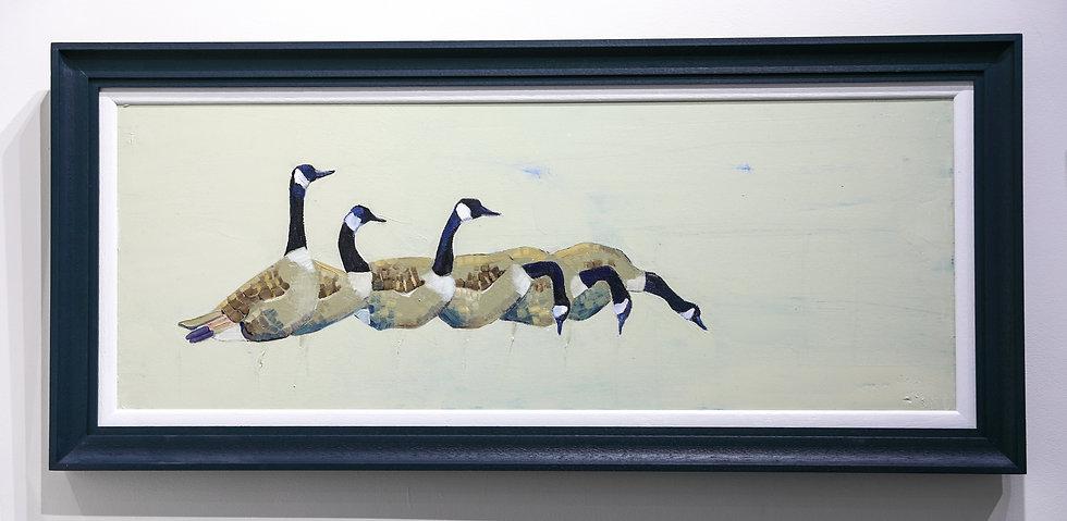 Rhes o Wyddau Canada / A row of Canada Geese