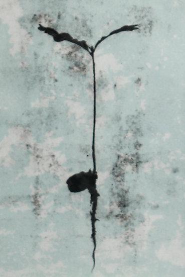 Growing Hope III / Magu Gobaith III