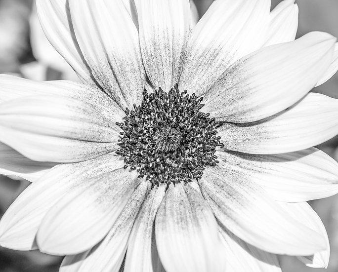 Sunbelievable – Brown Eyed Girl