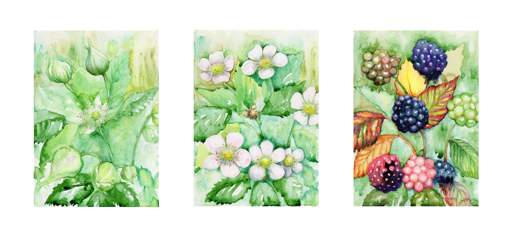 Katy Jones, 'Bramble Triptych.' Framed Size: 65cm x 37cm. £315