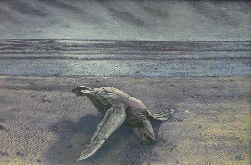 Green Sea Turtle, Hells Mouth / Crwban Môr Gwyrdd, Porth Neigwl