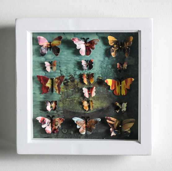 Butterfly Collection - Medium