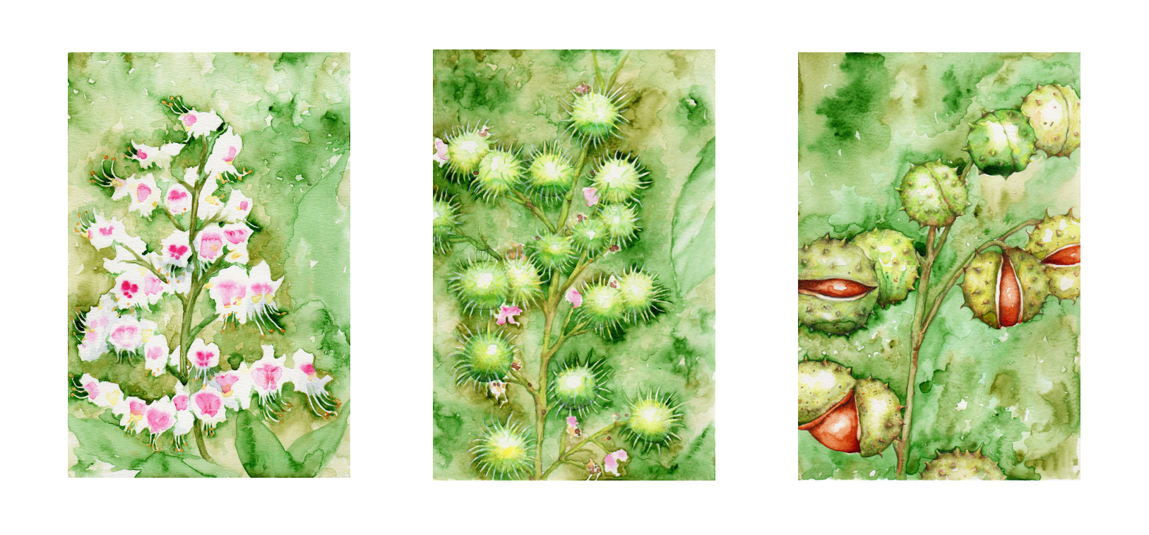 Katy Jones. 'Horse Chestnut Triptych.' Framed Size: 65cm x 37cm. £315