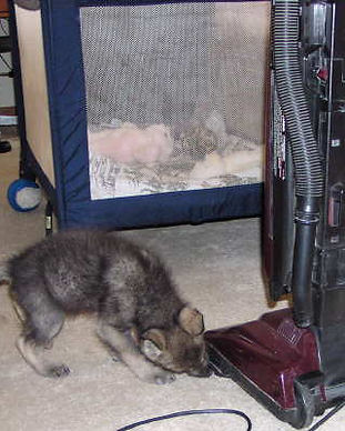 Checking out the vacuum.jpg