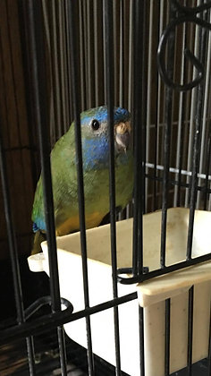 Donation to For the Birds Parrot Rescue and Sanctuary