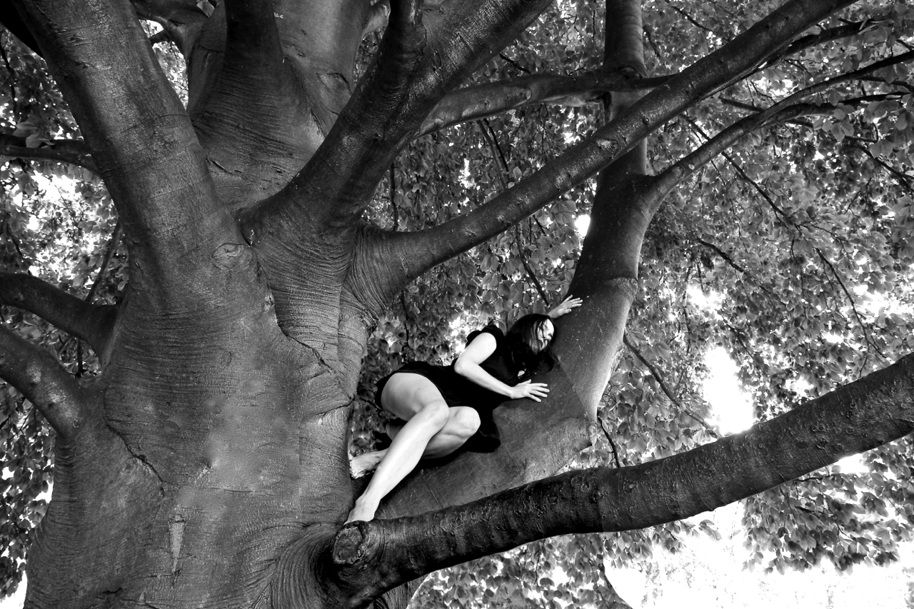 CDM IN THE TREE