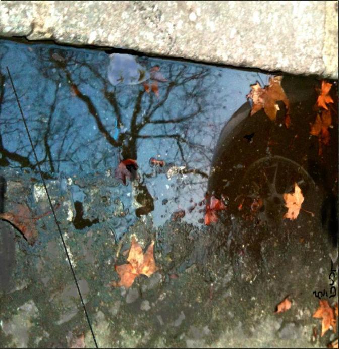 Roue reflet