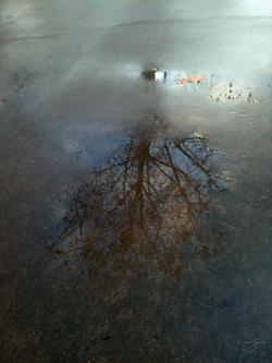 Reflets arbre