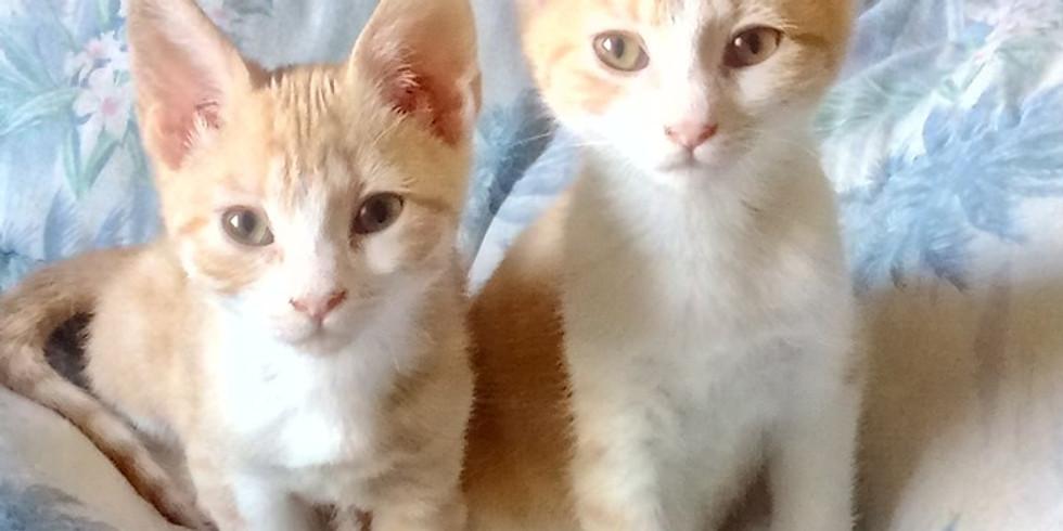 Journée d'adoption chats & chatons