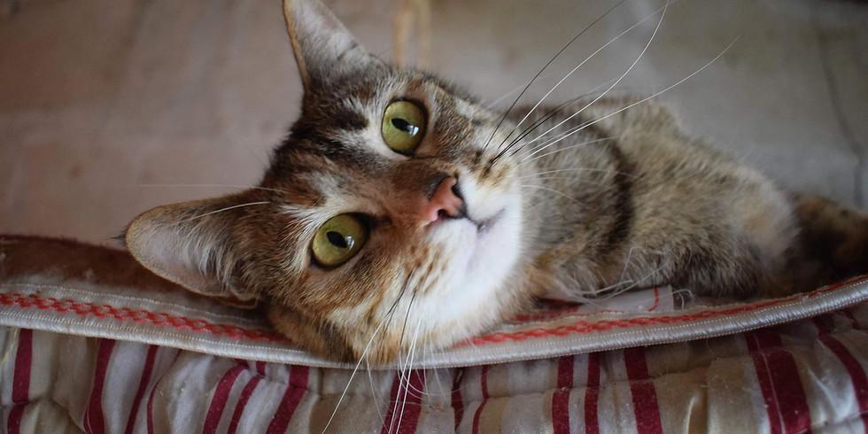 Journée d'adoption chats et chatons