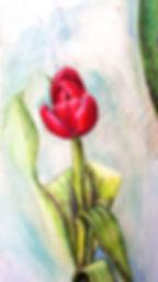 Tulip edit.jpg