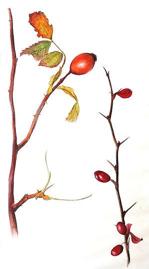 berries edit.jpg