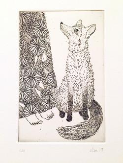Grimm - Les deux frères Le renard  7 x