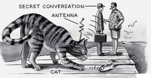 Operation Acoustic Kitty Spy Cat
