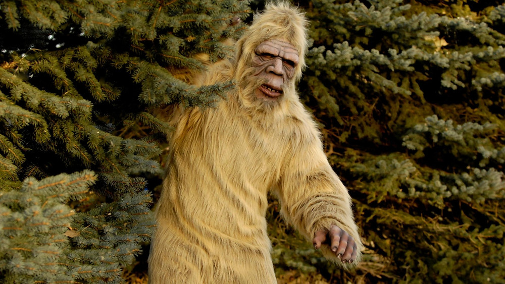 Photo of a man in a Bigfoot costume peaking out from the pine forrest