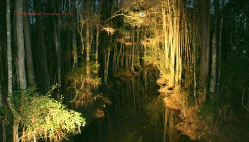 Okefenokee Swamp at night