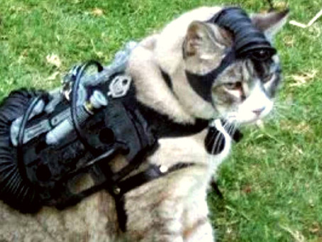 Was the CIA Building Cyborg Super Spy Kitties? The Very True Story of Operation Acoustic Kitty