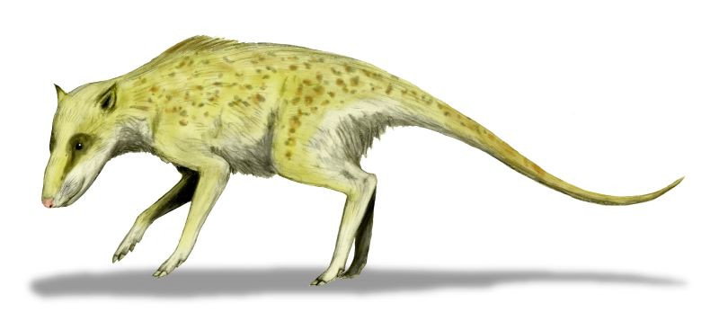 Artist depiction of an Indohyus