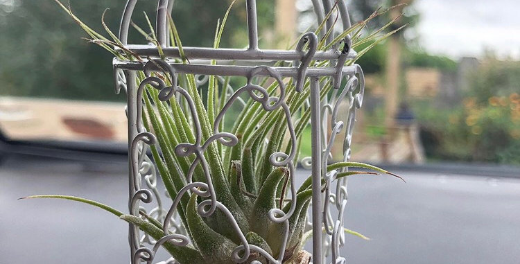 Bird cage with air plant